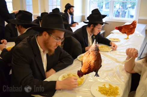 Eshel Hachnosas Orchim -Chicken-menachem mendel hendel (1)