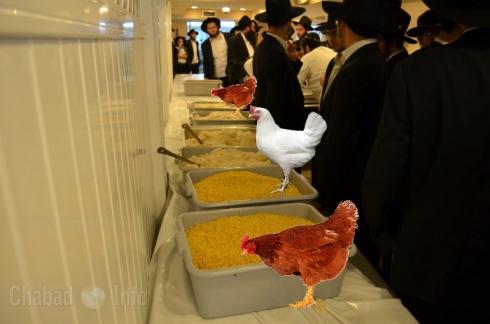Eshel Hachnosas Orchim -Chicken-menachem mendel hendel (2)